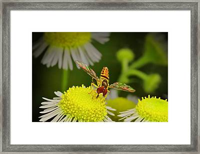 Sugar Bee Wings Framed Print