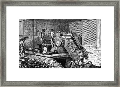 Sugar Cane Crushing Framed Print by Hulton Archive