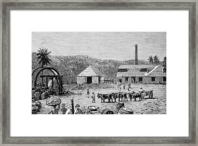 Sugar Mills Framed Print by Hulton Archive