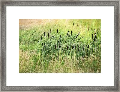 Summer Cattails In Field Of Grass - Framed Print