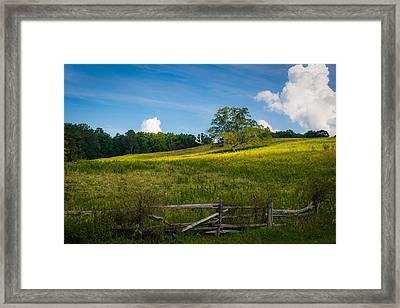 Blue Ridge Parkway - Summer Fields Of Yellow - Lone Tree Framed Print