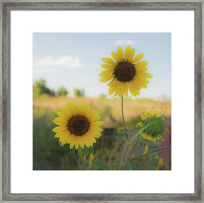 Summer Softness Framed Print