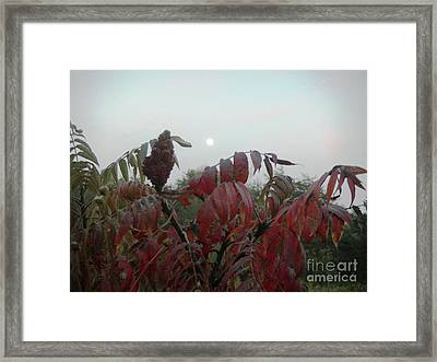 Framed Print featuring the photograph Summer's End by Rosanne Licciardi