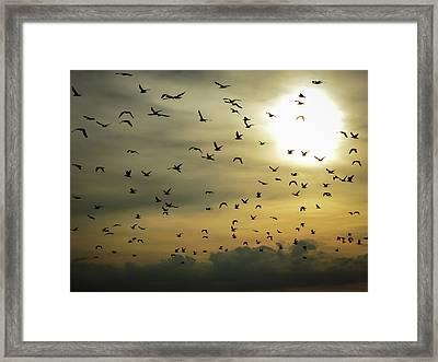 Sun Flock Framed Print