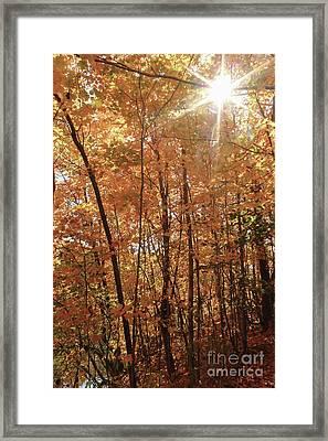 Sunburst Of Fall Framed Print
