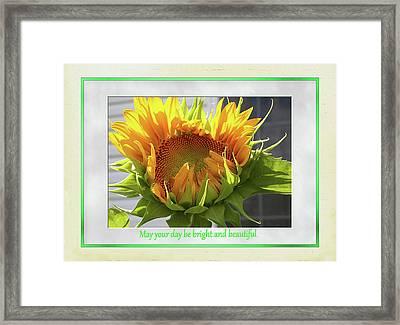 Sunflower Birthday Framed Print