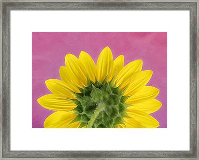 Framed Print featuring the photograph Sunflower On Pink - Botanical Art By Debi Dalio by Debi Dalio