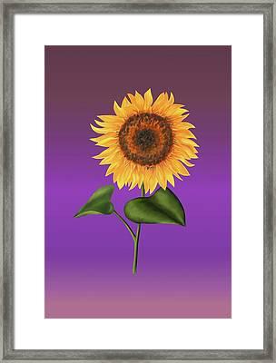 Sunflower On Purple Framed Print