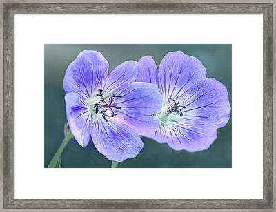 Framed Print featuring the photograph Sunny Blooms by Leda Robertson