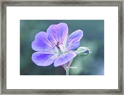 Framed Print featuring the photograph Sunny Blossom by Leda Robertson