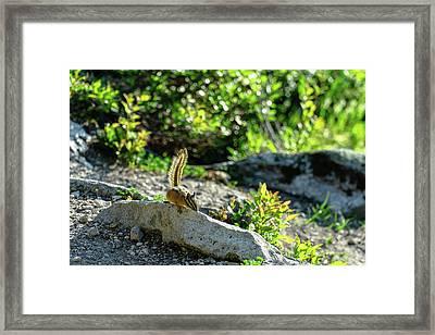 Sunny Chipmunk Framed Print