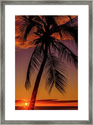 Sunset At The Palm Framed Print