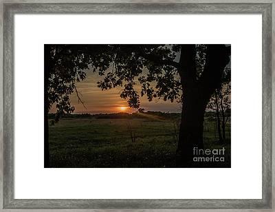 Sunset Under The Tree Framed Print
