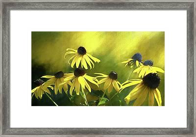 Sunshine On Black Eyed Susan Framed Print