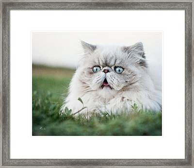 Surprised Cat Framed Print by Tavia
