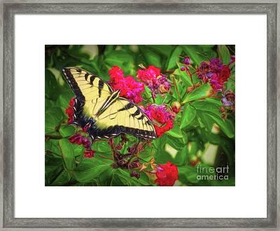 Swallowtail Among Flowers Framed Print