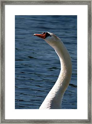 Framed Print featuring the photograph Swan's Neck by Onyonet  Photo Studios