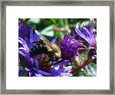Framed Print featuring the photograph Sweet Harvest by Rosanne Licciardi