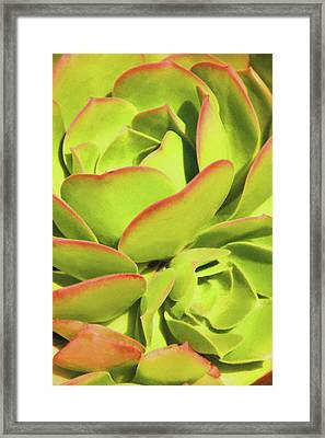 Framed Print featuring the photograph Sweet Succulents I by Leda Robertson
