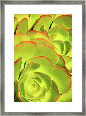 Framed Print featuring the photograph Sweet Succulents II by Leda Robertson
