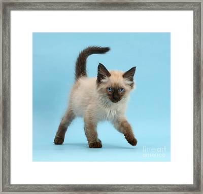 Framed Print featuring the photograph Swiggerty Swooty by Warren Photographic