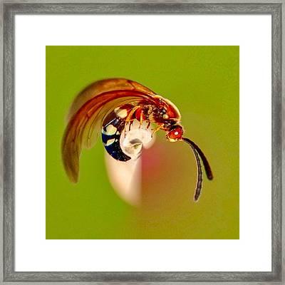 Swirly Wasp Framed Print