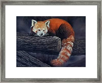 Takeo, The Red Panda Framed Print
