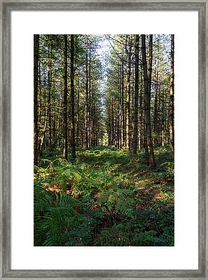 Framed Print featuring the photograph Tall Trees In Sherwood Forest by Scott Lyons