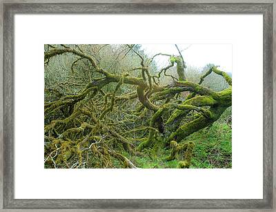 Framed Print featuring the photograph Tangled Moss by Mark Duehmig