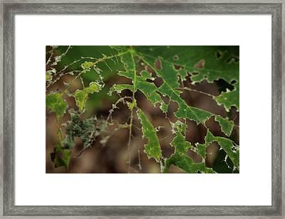 Tasty Tree Framed Print