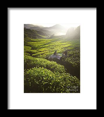 Pickers Framed Prints
