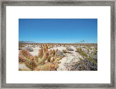Teddy Bear Cactus Framed Print