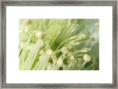 Tendrils Framed Print