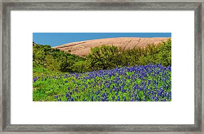 Texas Bluebonnets And Enchanted Rock 2016 Framed Print