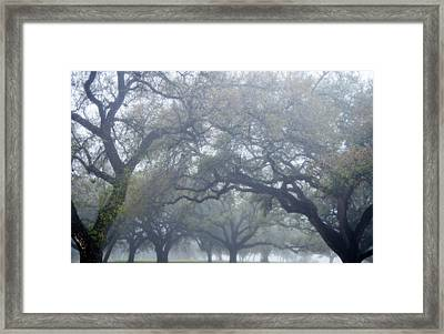 Texas Live Oaks In Fog Framed Print