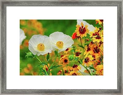 Texas Wildflowers Framed Print