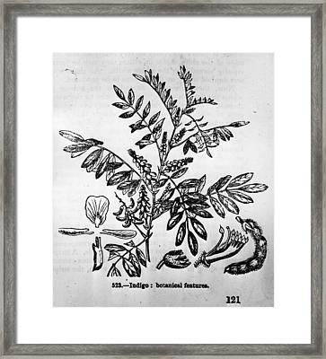 Textile Dye Indigo Framed Print by Hulton Archive