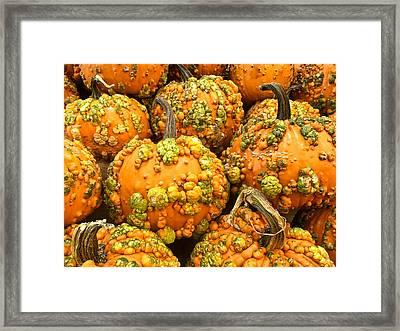 Textured Pumpkins  Framed Print