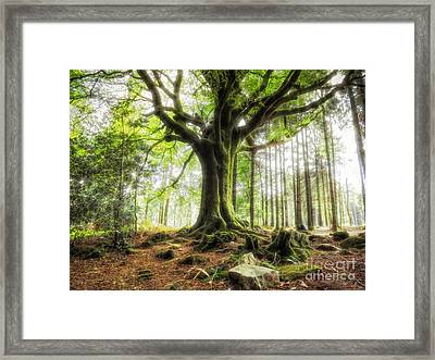 The Beech Of Ponthus And Sidoine Framed Print
