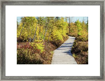 Framed Print featuring the photograph The Boardwalk At Mer Bleue. by Rob Huntley