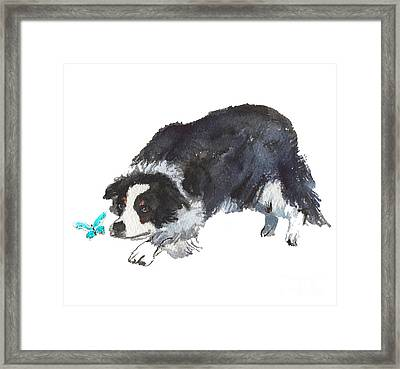 The Collie And Blue Butterfly Framed Print