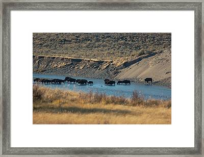 Framed Print featuring the photograph The Crossing by Pete Federico
