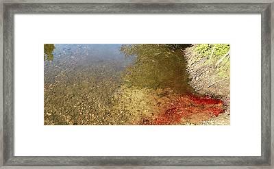 The Earth Is Bleeding Framed Print