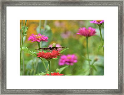 The First Hang-glider Framed Print by JAMART Photography