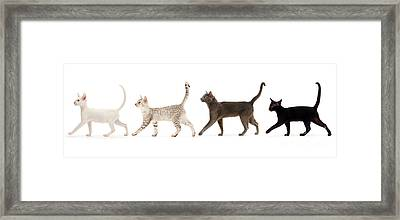 Framed Print featuring the photograph The Kits Parade - Four by Warren Photographic