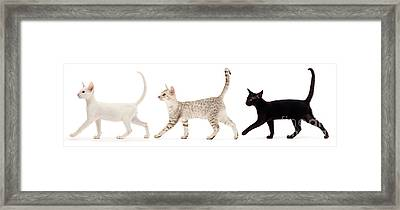 Framed Print featuring the photograph The Kits Parade - Three by Warren Photographic