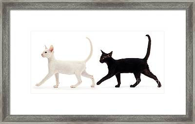 Framed Print featuring the photograph The Kits Parade - Two by Warren Photographic