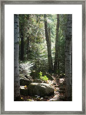 The Living Forest Framed Print
