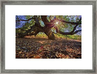 The Old Oak Framed Print