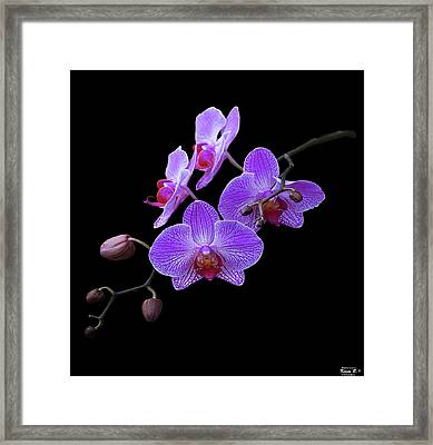 The Orchids Framed Print